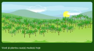 Minha floresta particular no Click Árvore.